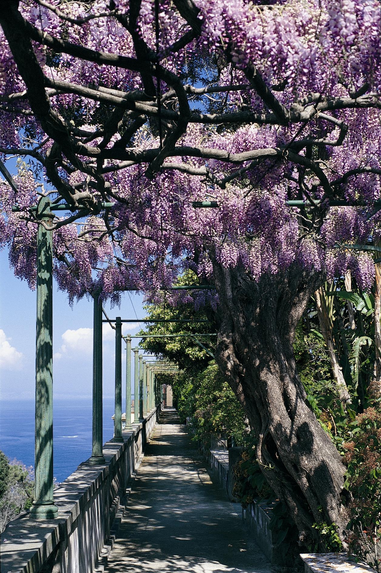 Grand Hotel Excelsior Vittoria Sorrento wisteria