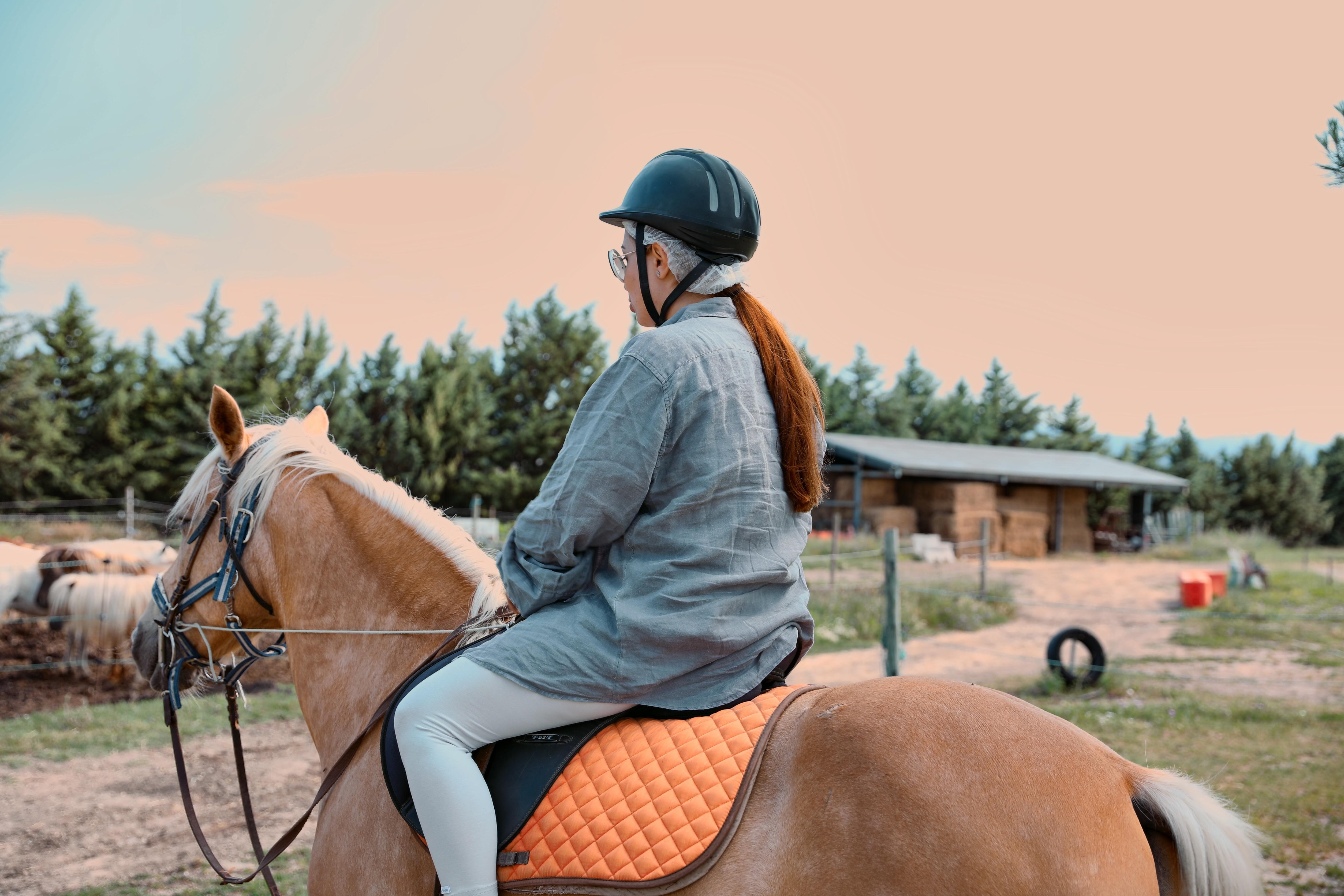 hanushka toni horse palamino provence horse riding